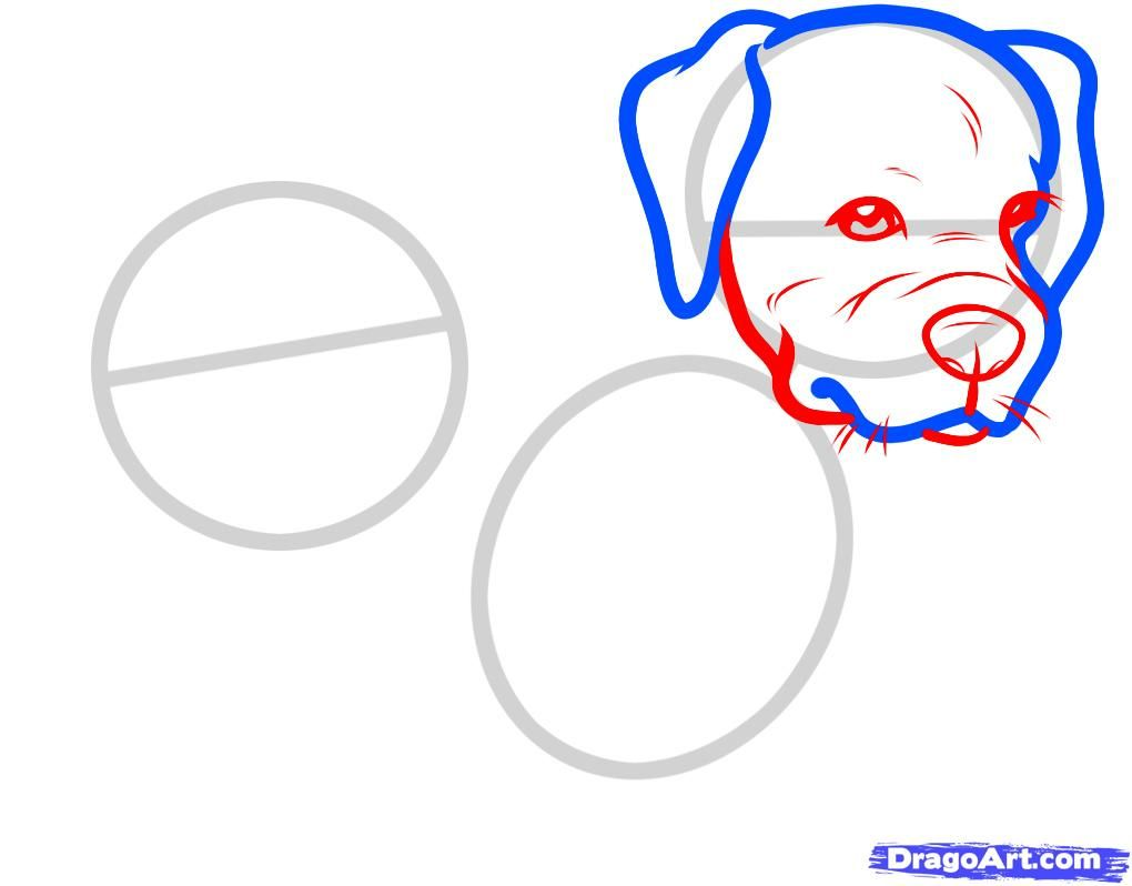 How to draw the head of the Bulldog with a pencil step by step 4