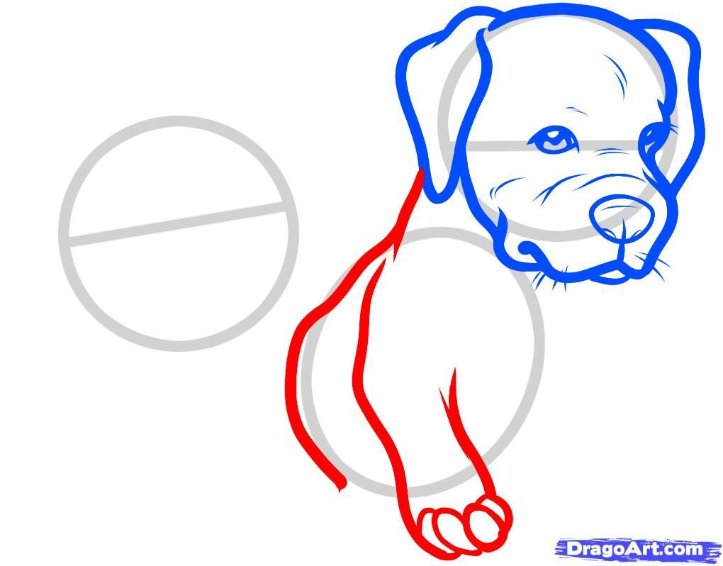 How to draw the head of the Bulldog with a pencil step by step 5