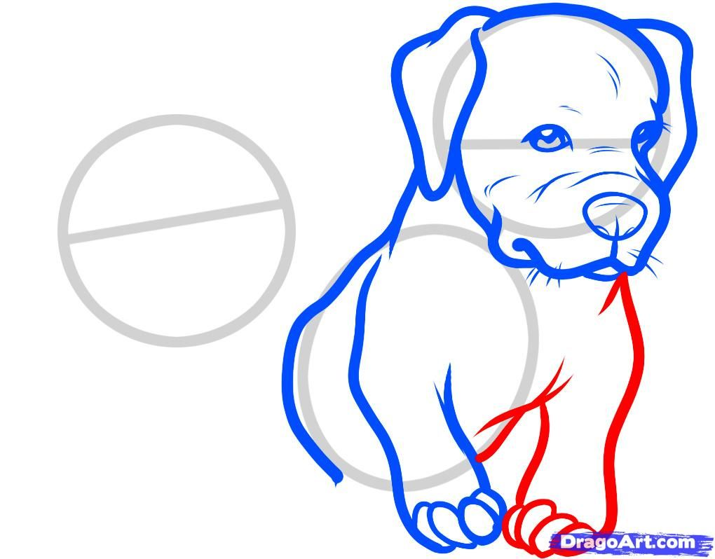 How to draw the head of the Bulldog with a pencil step by step 6
