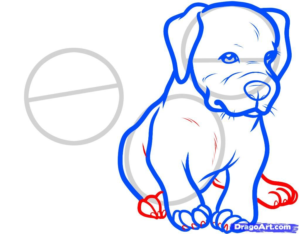 How to draw the head of the Bulldog with a pencil step by step 7