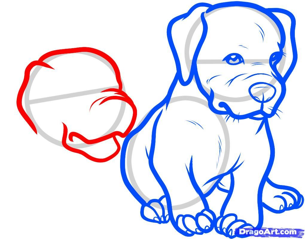 How to draw the head of the Bulldog with a pencil step by step 8