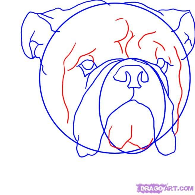 How to draw a dog the Pit bull terrier with a pencil step by step 6