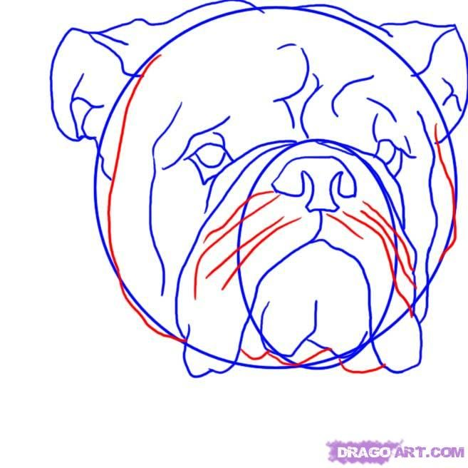 How to draw a dog the Pit bull terrier with a pencil step by step 7
