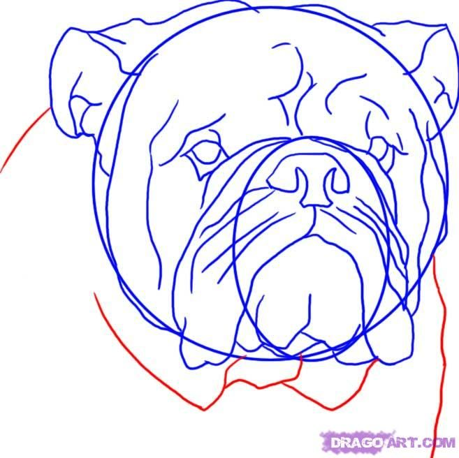 How to draw a dog the Pit bull terrier with a pencil step by step 8