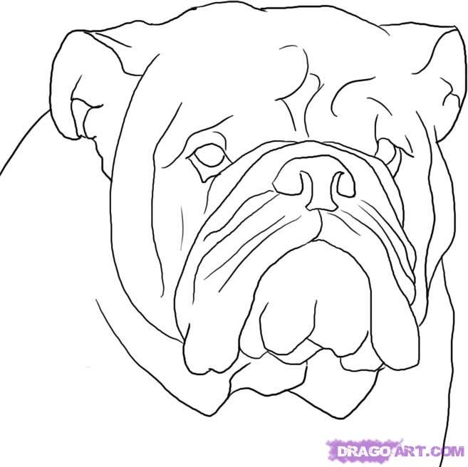 How to draw the head of the Bulldog with a pencil step by step