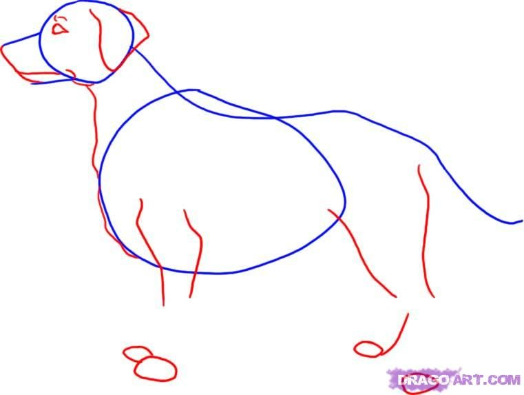How to draw a dog the Pit bull terrier with a pencil step by step 3