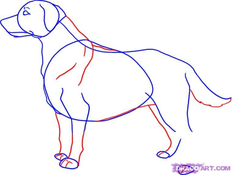 How to draw a dog the Pit bull terrier with a pencil step by step 4