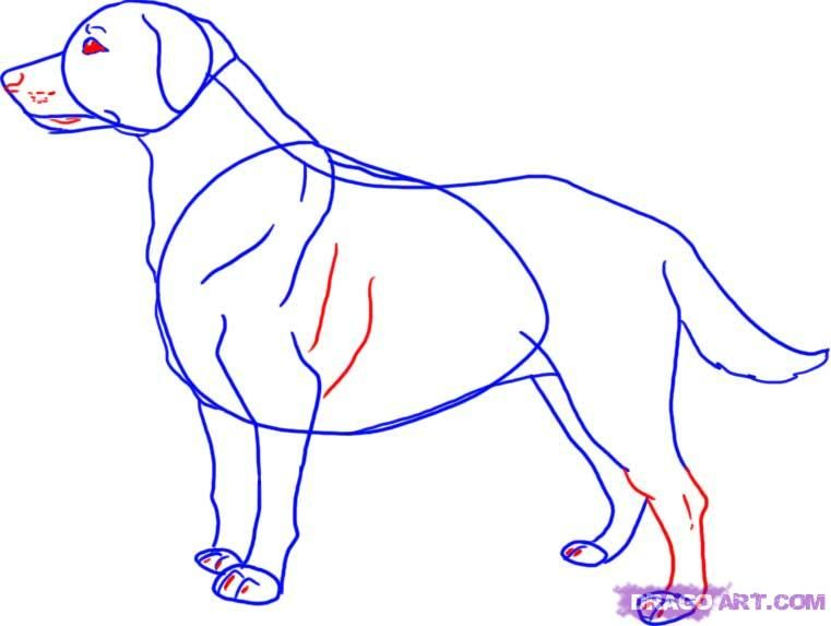 How to draw a dog the Pit bull terrier with a pencil step by step 5