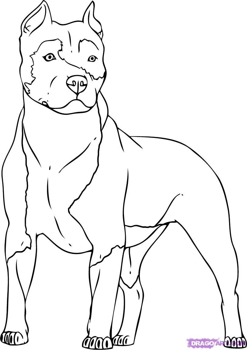 How to draw a dog the Pit bull terrier with a pencil step by step