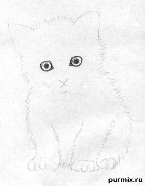 How to draw a fluffy kitten with colored pencils 4