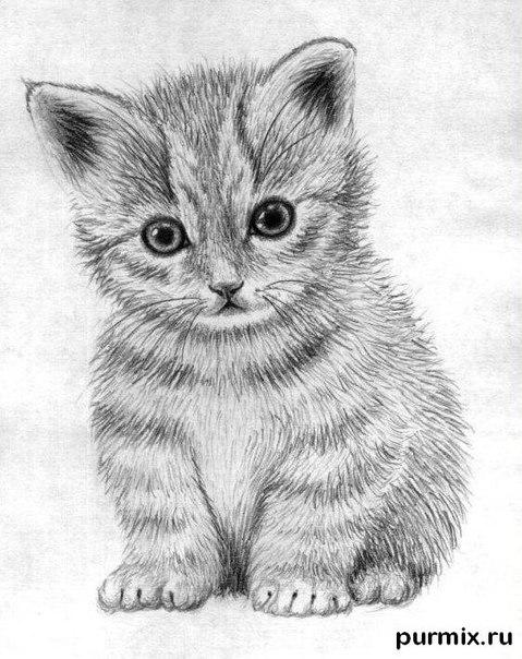 How to learn to draw a little kitten a simple pencil