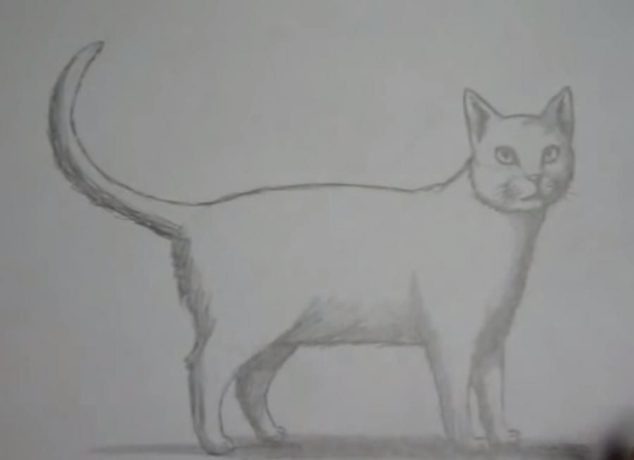 How to draw the lying cat with colored pencils step by step 6