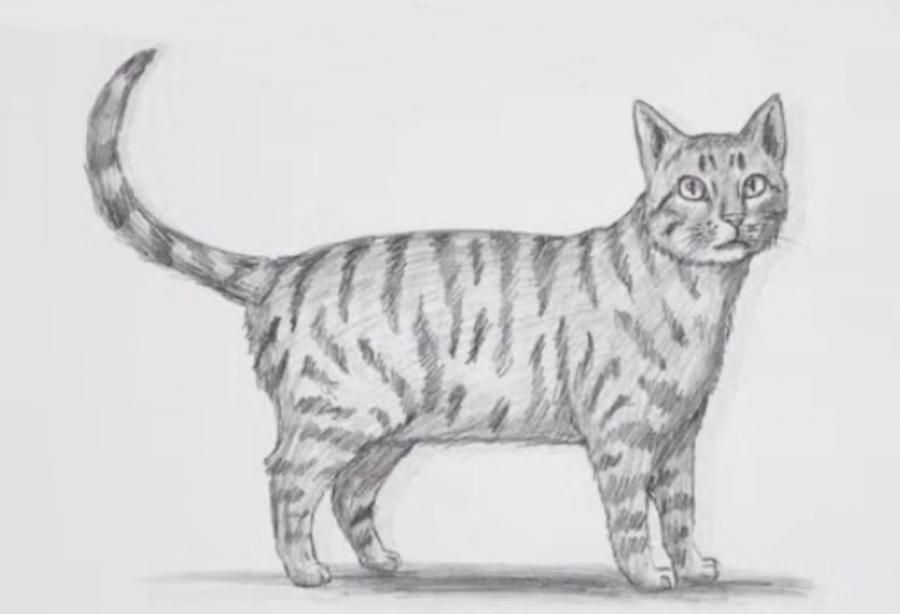 How step by step to draw a cat with a simple pencil on paper