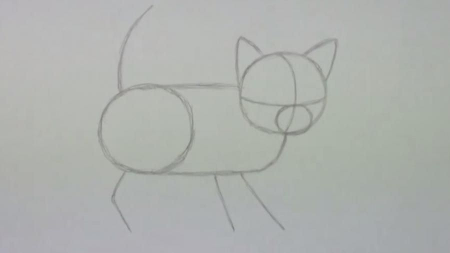 How to draw a cat's eye on paper with a pencil step by step 2