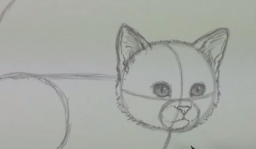 How to draw a cat's eye on paper with a pencil step by step 4