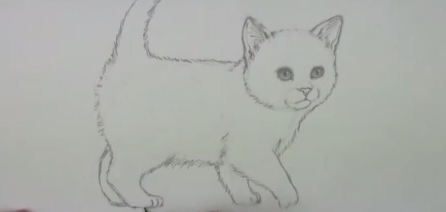 How to draw a cat's eye on paper with a pencil step by step 5