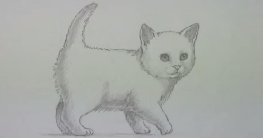 How to draw a cat's eye on paper with a pencil step by step 6