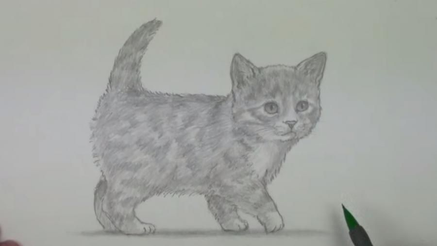 How to draw a fluffy kitten with a simple pencil