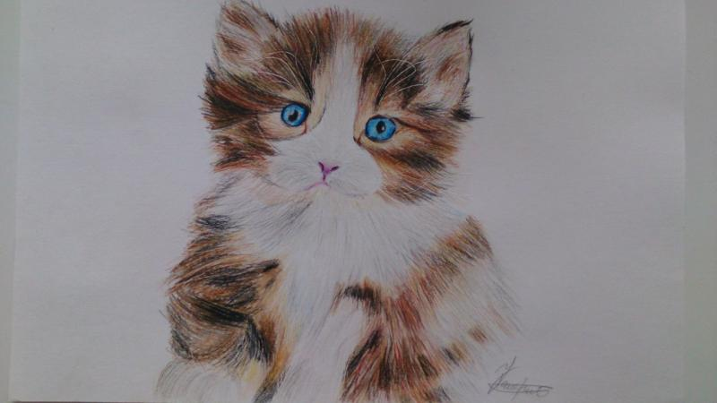 How to draw a fluffy kitten with colored pencils