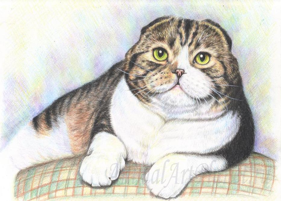 How to draw the lying cat with colored pencils step by step