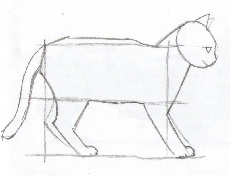 How to draw a cat step by step with a pencil 4