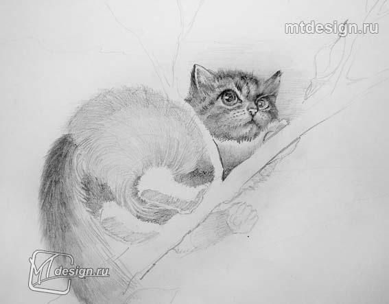 How to draw a muzzle of a cat with a pencil step by step 3