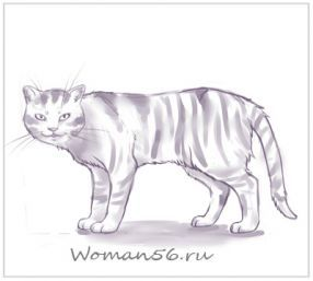 How to draw a cat step by step with a pencil