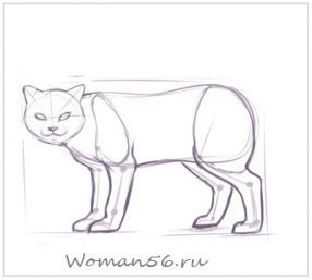How to draw the played Kitten with a pencil step by step 8