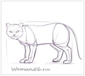 How to draw the played Kitten with a pencil step by step 9