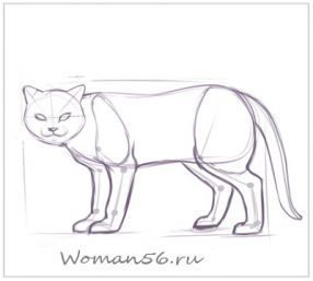 How to draw the played Kitten with a pencil step by step 10