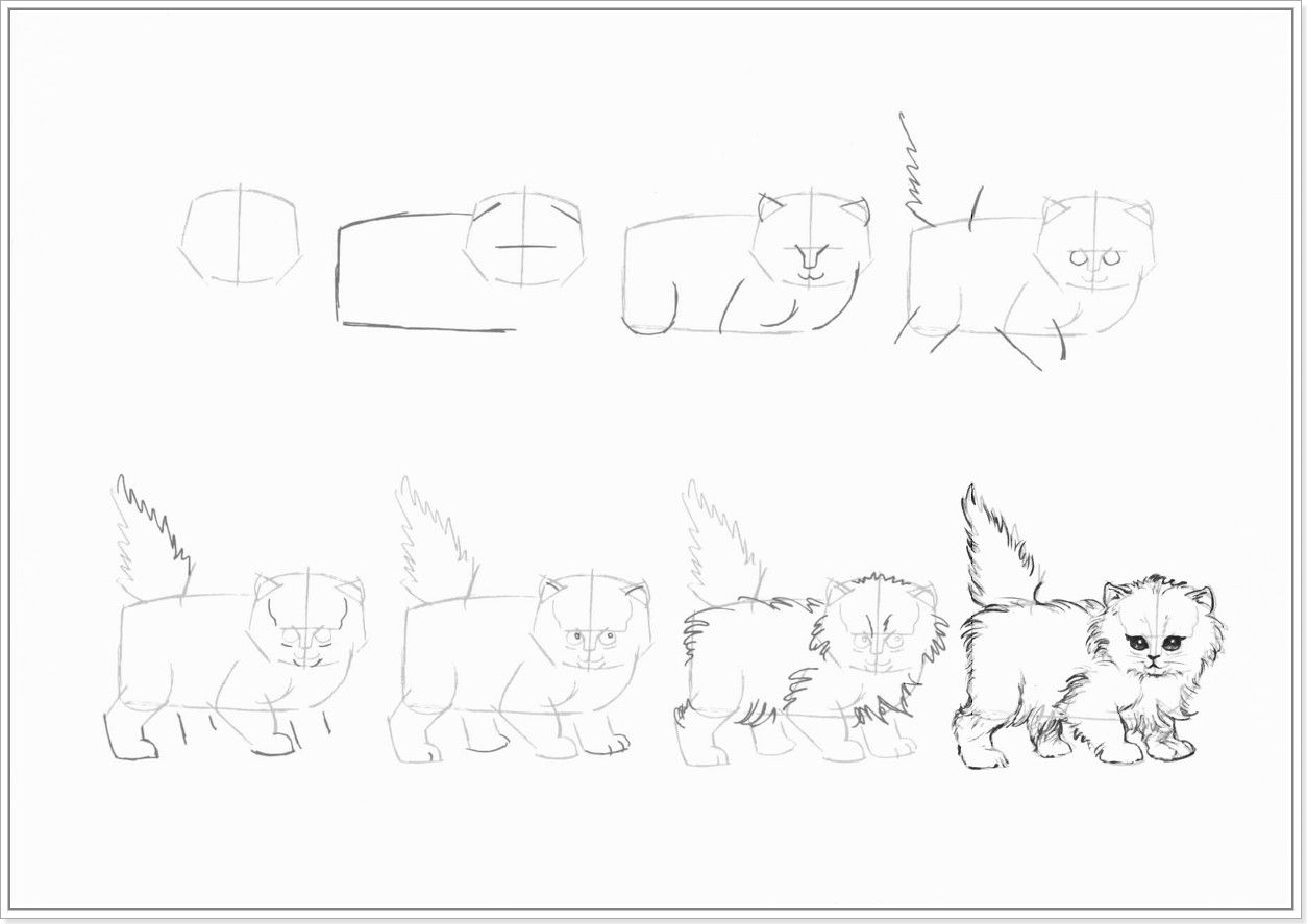 How to draw a kitten with a pencil step by step