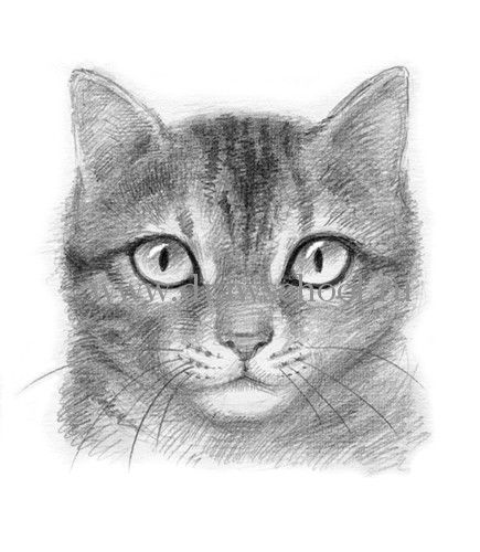 How to draw a muzzle of a cat with a pencil step by step