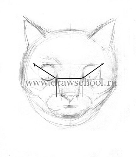 How to draw a cat of breed the Turkish Mohair with a pencil step by step 6