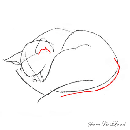 How to draw the realistic head of a cat step by step 6
