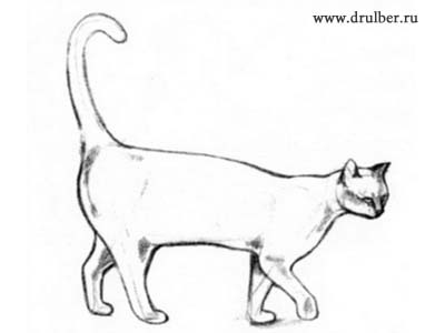 We draw kittens step by step 3