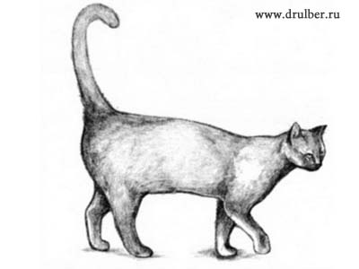 How to draw the Cat with a pencil step by step