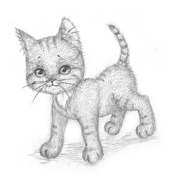 How to draw the Lying Kitten with a pencil step by step 9