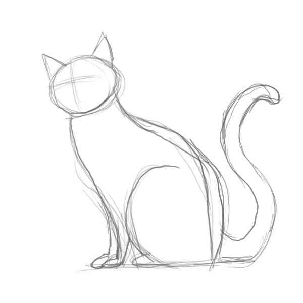 How to draw a cat of breed the Turkish Mohair with a pencil step by step 3