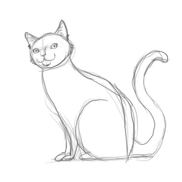 How to draw a cat of breed the Turkish Mohair with a pencil step by step 4