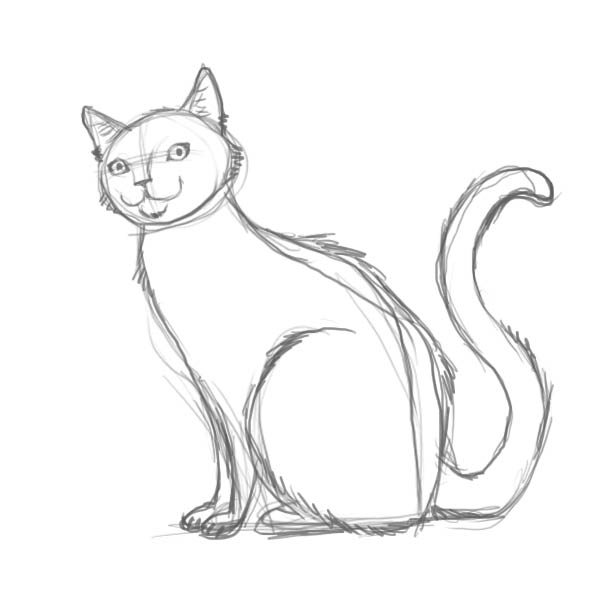 How to draw a cat of breed the Turkish Mohair with a pencil step by step 5