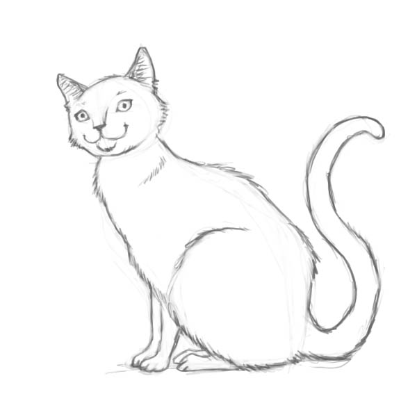 How to draw a cat of breed the Turkish Mohair with a pencil step by step 7