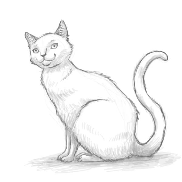 How to draw a cat of breed the Turkish Mohair with a pencil step by step 8