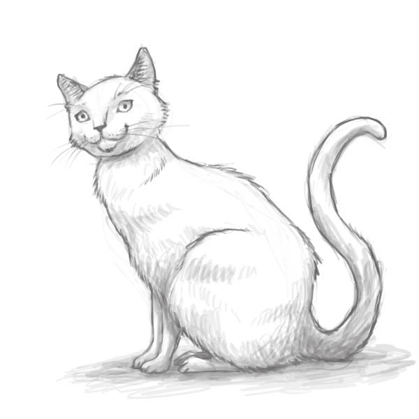 How to draw a cat of breed the Turkish Mohair with a pencil step by step 10