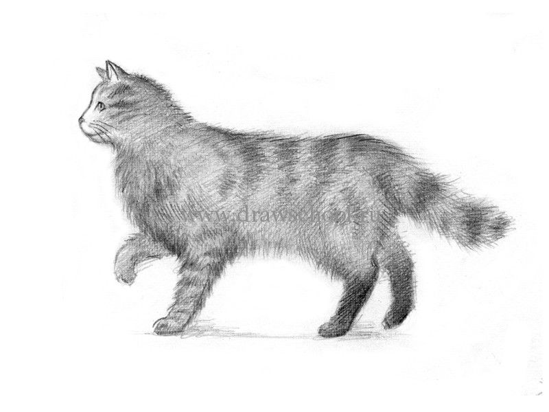 How to draw a cat in the movement with a pencil step by step