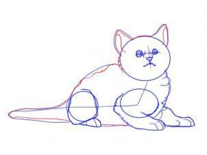 How to draw the sleeping kitten step by step 6
