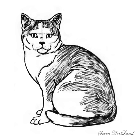 How to draw a cat of breed American short-haired with a pencil step by step