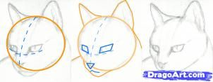 How to Draw the Cat with the Pencil step by step 3