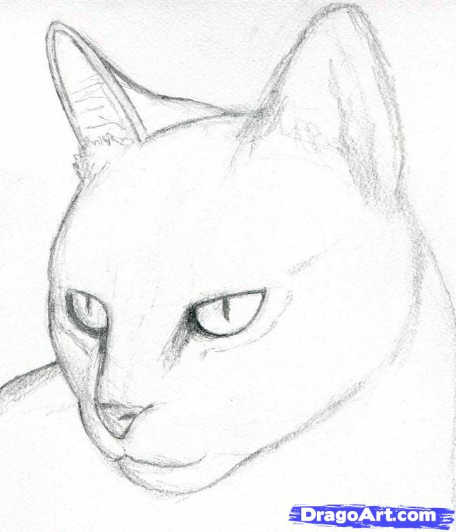 How to Draw the Cat with the Pencil step by step 4