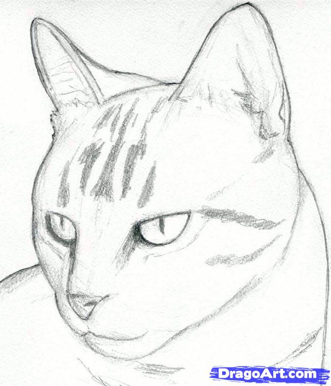 How to Draw the Cat with the Pencil step by step 5