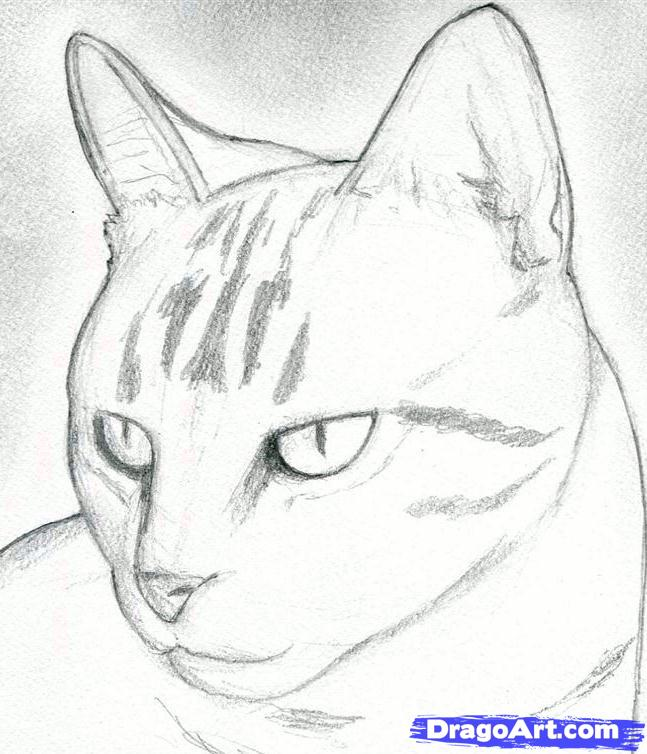 How to Draw the Cat with the Pencil step by step 6